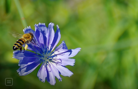 Bees love the colour blue!
